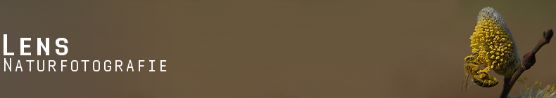 GreenLens.de - Headerbild